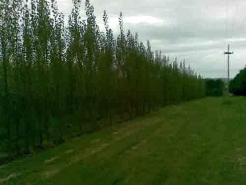 Arboles y arbustos clasificados for Viveros en maldonado