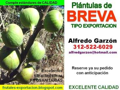 Semillas breva semillero pl ntulas plantas vivero for Viveros frutales bogota
